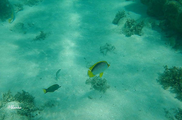 142 great barrier reef  fish